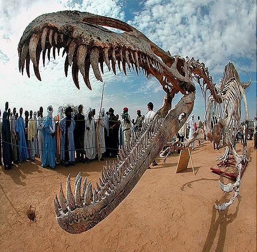 paleontology-fossils