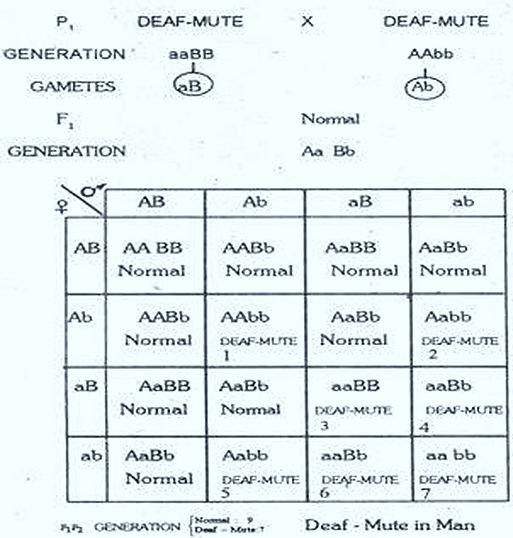Complementary-genes