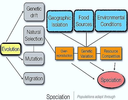 Speciation-evolution