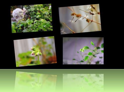 2010-01-29 Testbilder av nytt kamera1