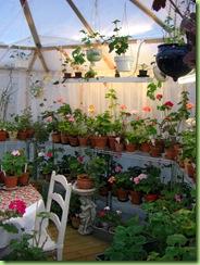 Blomster og drivhus mai 09 010