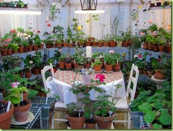 Blomster og drivhus mai 09 005