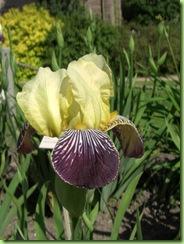 Botanisk have 7 juni 09 005
