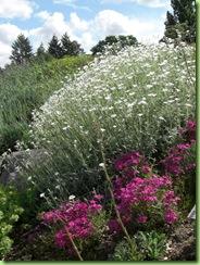 Botanisk have 7 juni 09 012