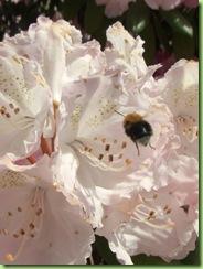 Botanisk have 7 juni 09 022