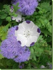 Blomster i haven juli 09 008
