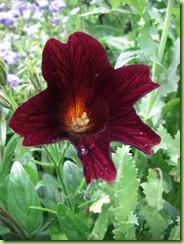 Blomster i haven juli 09 011