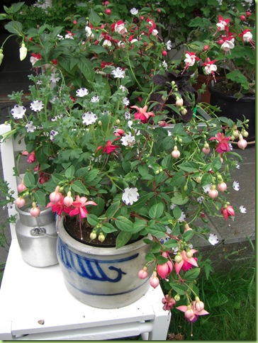 Blomster i haven juli 09 029