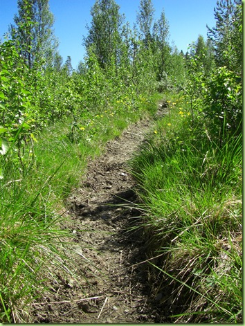 Veien hjem fra Skåbu, juni 09 001