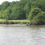 La Vilaine de Redon à Arzal