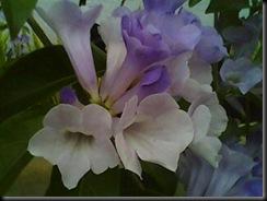 D'laman 21.2.2011 002