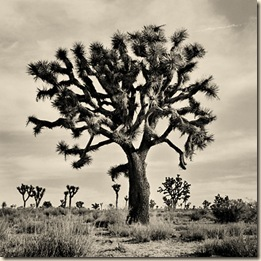 Joshua_Tree_CA_1999f