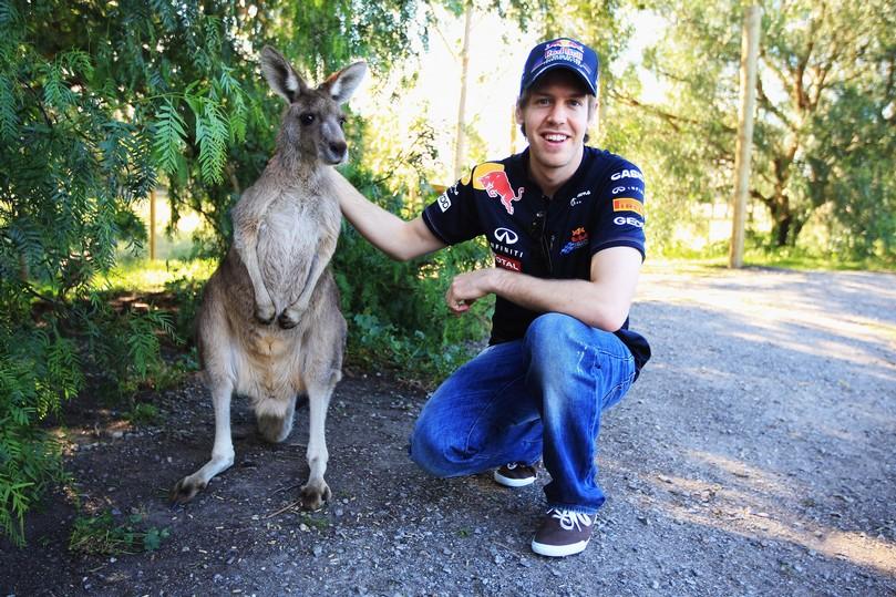 фото Себастьян Феттель и кенгуру на Гран-при Австралии 2011