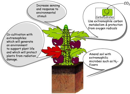 Designer Plants on Mars