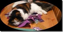 010209 cat