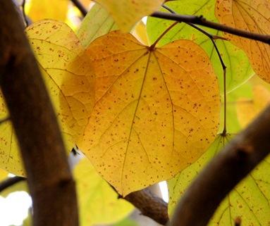 treegrowersdiary
