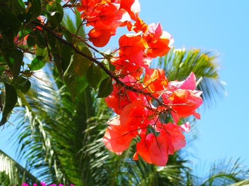 Cabo San Lucas 6 031