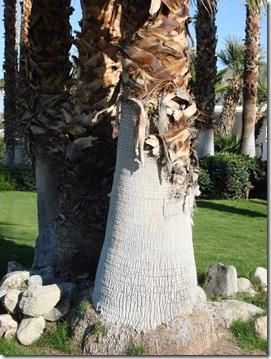 Palm Springs 3 119