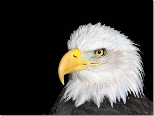 Wallpaper Of Eagle. hairstyles Eagle Wallpapers