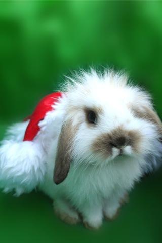 Christmas_bunny