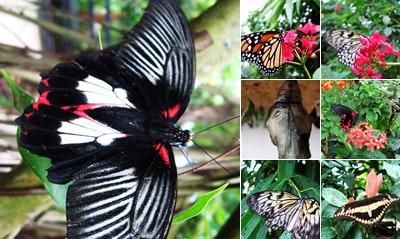 View Butterfly Garden