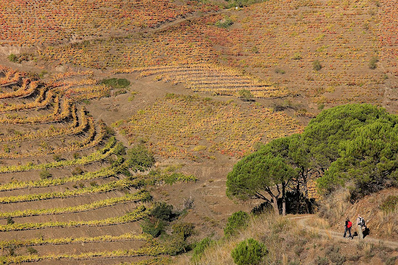 Camí del Mas de la Plana del Ceba, xarxa de camins del Priorat. Vinyes a la zona del mas de la Rosa, DOQ Priorat. Porrera, Priorat, Tarragona