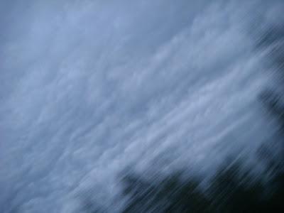 木々と鉛色の雲