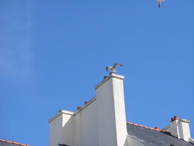 家の屋根に留まるかもめ