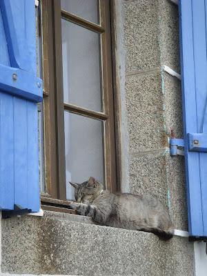 窓辺で寝るねこ