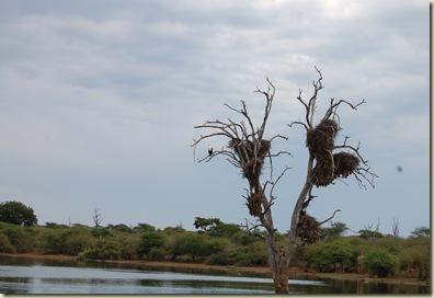 Kruger Park 214