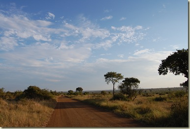 Kruger Park 418