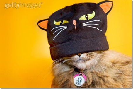 gatos disfrazados (31)