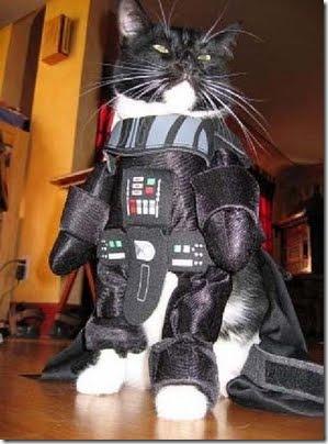 gatos disfrazados (21)