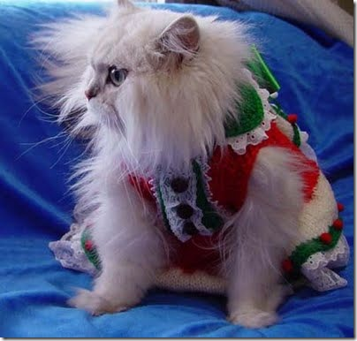 gatos disfrazados (22)