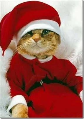 gatos disfrazados (25)