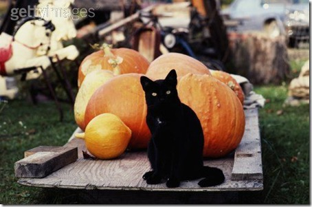 gatos disfrazados (33)