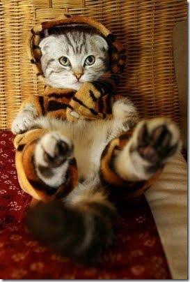 gatos disfrazados (2)