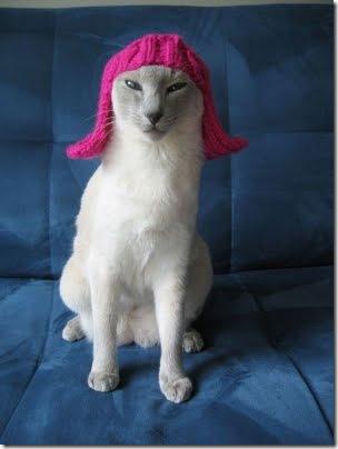 gatos disfrazados (4)