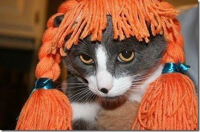 gatos disfrazados (19)