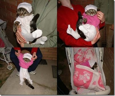 gatos disfrazados (9)
