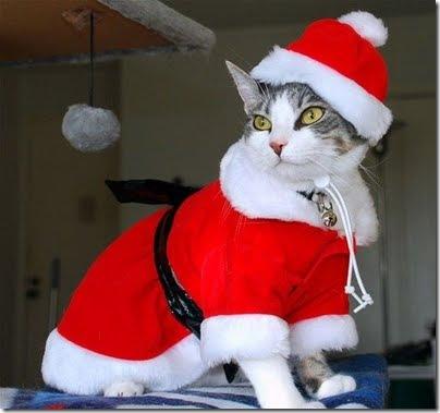 gatos disfrazados (11)
