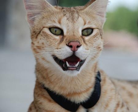 gato miblogdecosasdivertidas (11)