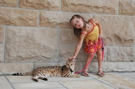 gato miblogdecosasdivertidas (9)