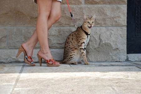 gato miblogdecosasdivertidas (8)