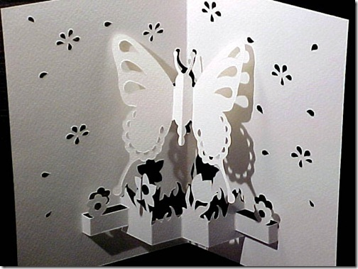 butterfly-white