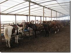 5285 Island Equestrian Center South Padre Island Texas