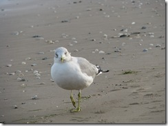 5554 Seagull South Padre Island Texas