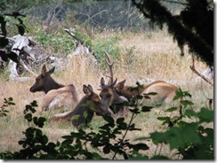 3772 Elk between Orick & Klamath CA