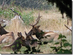 3774 Elk between Orick & Klamath CA