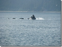 4522 Whale Watching Juneau AK